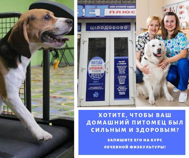 Ветеринарная физическая реабелитация для собак